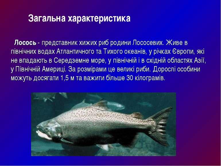 Лосось- представник хижих риб родини Лососевих. Живе в північних водах Атлан...