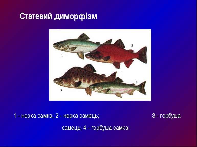 1 - нерка самка; 2 - нерка самець; 3 - горбуша самець; 4 - горбуша самка. Ста...