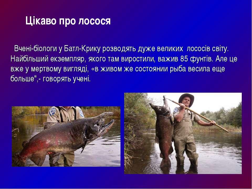 Вчені-біологи у Батл-Крику розводять дуже великих лососів світу. Найбільший е...