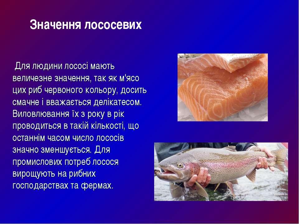 Для людини лососі мають величезне значення, так як м'ясо цих риб червоного ко...