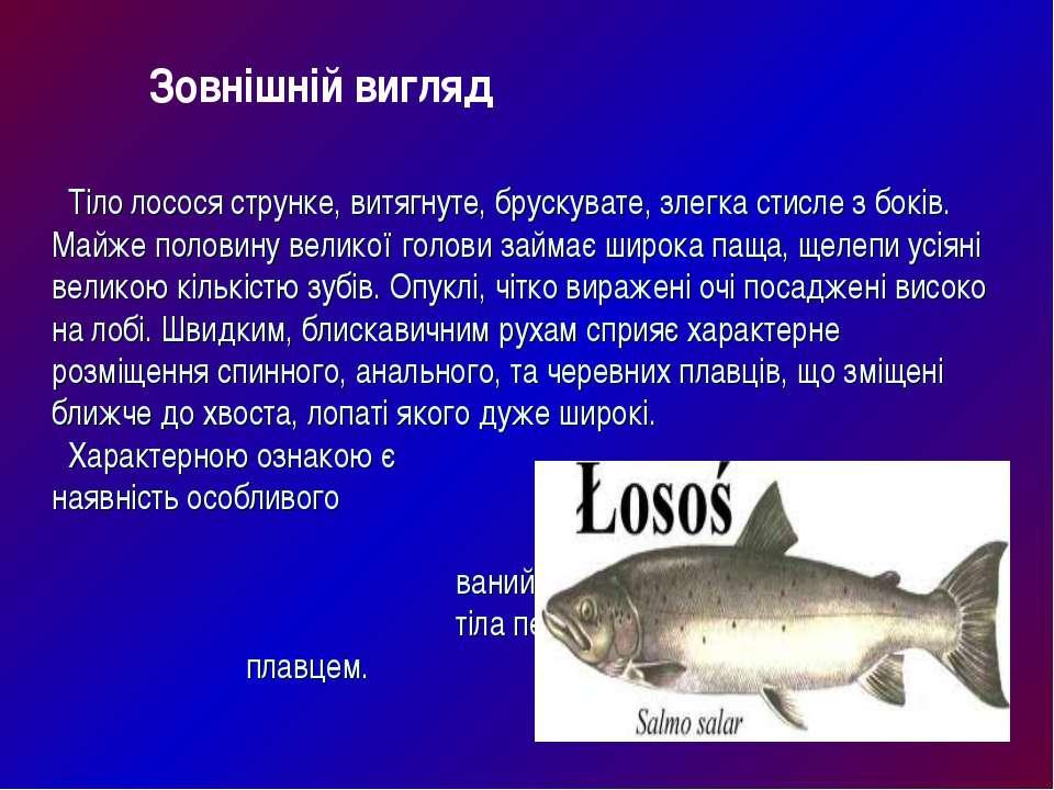 Тіло лосося струнке, витягнуте, брускувате, злегка стисле з боків. Майже поло...