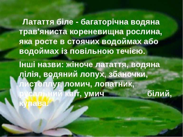 Латаття біле - багаторічна водяна трав'яниста кореневищна рослина, яка росте ...
