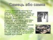 Стать у крокодилів визначається температурними умовами. Якщо яйця розвиваютьс...