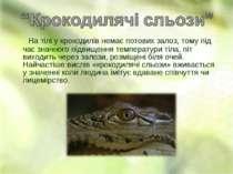 На тілі у крокодилів немає потових залоз, тому під час значного підвищення те...