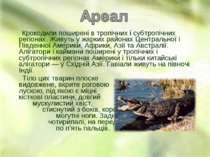 Крокодили поширені в тропічних і субтропічних регіонах. Живуть у жарких район...