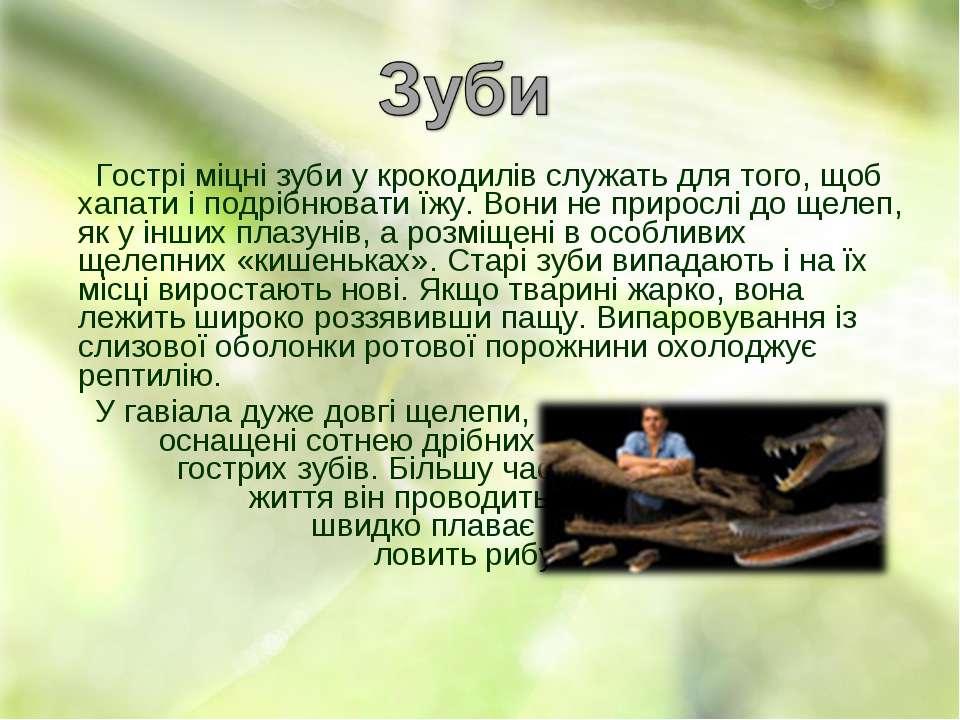 Гострі міцні зуби у крокодилів служать для того, щоб хапати і подрібнювати їж...