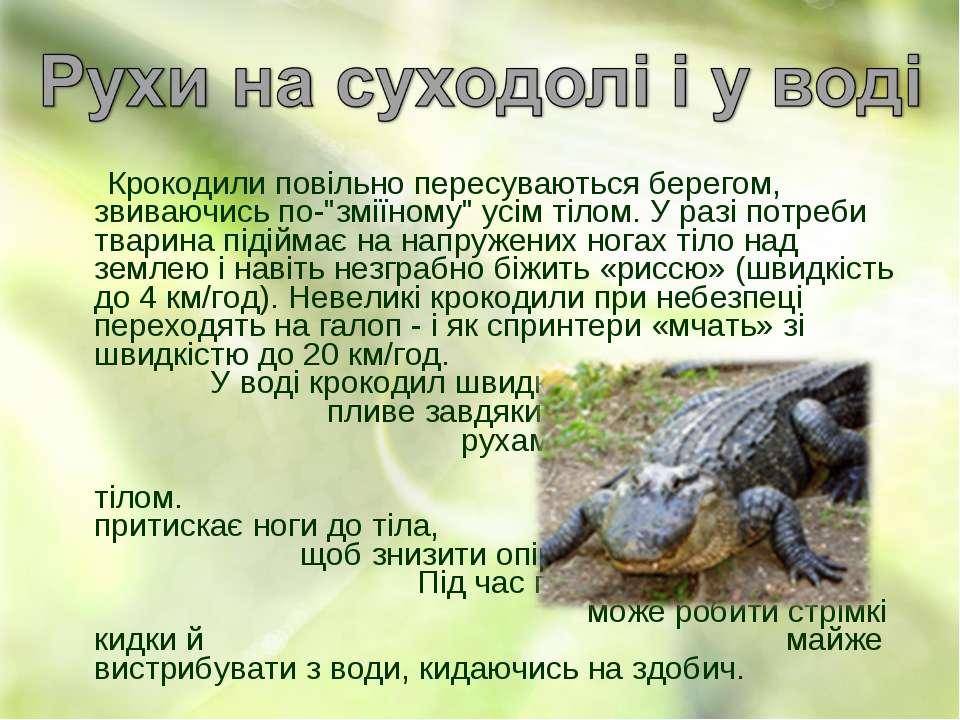 """Крокодили повільно пересуваються берегом, звиваючись по-""""зміїному"""" усім тілом..."""