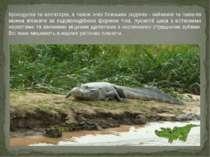 Крокодилів та алігаторів, а також їхніх близьких родичів - кайманів та гавіал...