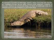 Всі крокодили поселяються біля води - болота, озера, тихої річки або протоки,...