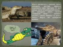 Мирно уживаючись у великих групах, крокодили все-таки ревносно охороняють сво...