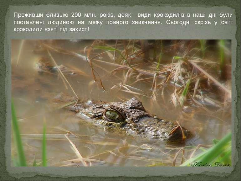 Проживши близько 200 млн. років, деякі види крокодилів в наші дні були постав...