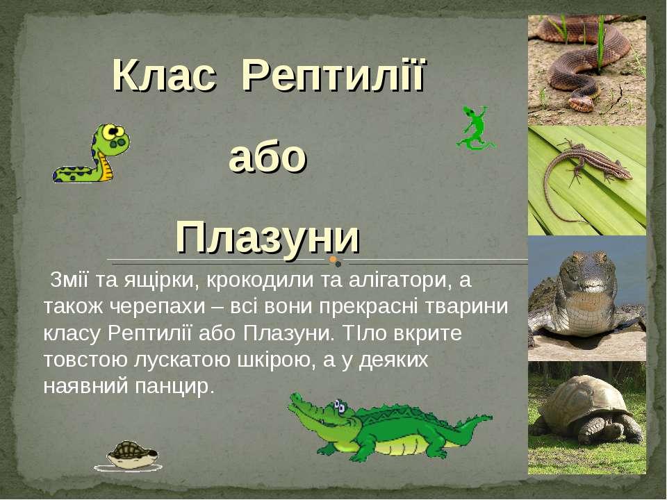 Змії та ящірки, крокодили та алігатори, а також черепахи – всі вони прекрасні...