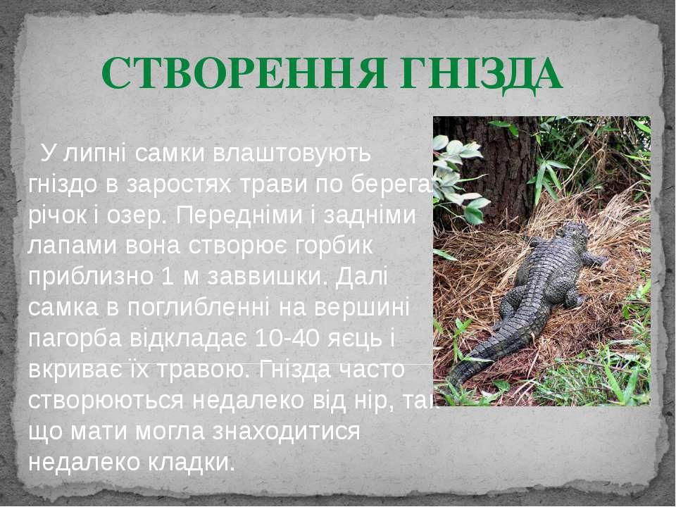У липні самки влаштовують гніздо в заростях трави по берегах річок і озер. Пе...