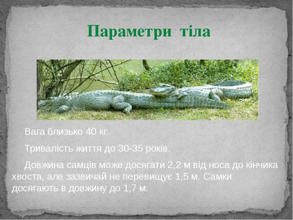 Вага близько 40 кг. Тривалість життя до 30-35 років. Довжина самців може дося...