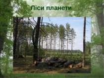 Ліси планети
