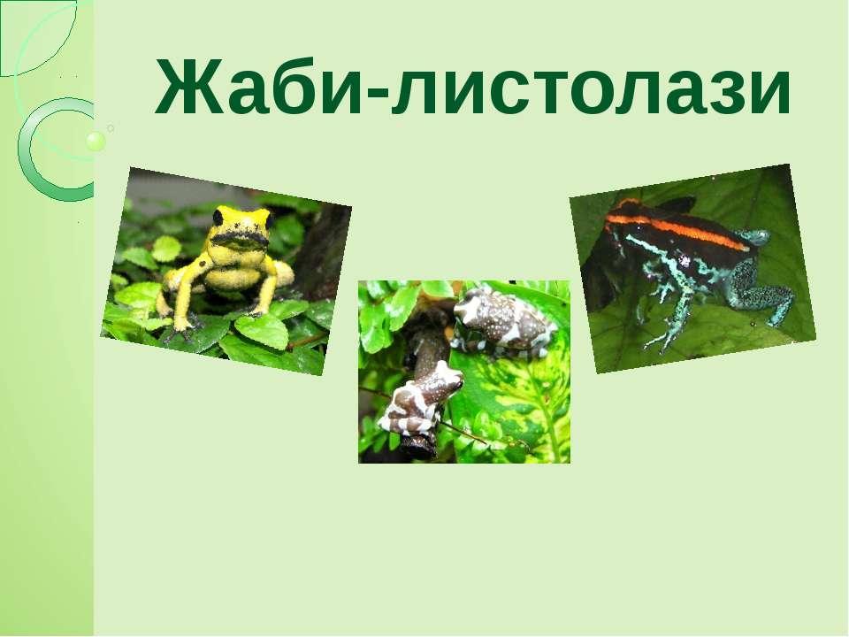 Жаби-листолази