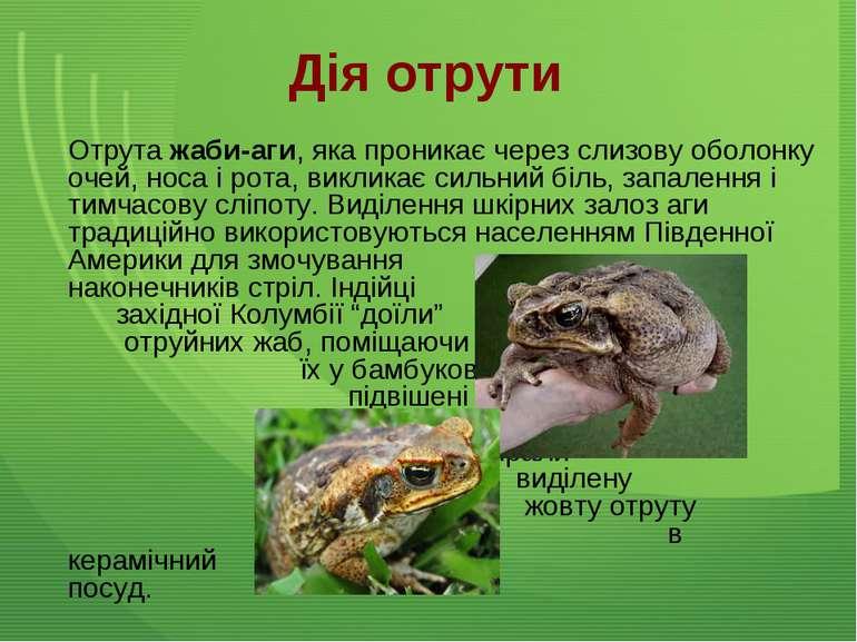 Дія отрути Отрута жаби-аги, яка проникає через слизову оболонку очей, носа і ...