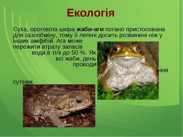 Екологія Суха, ороговіла шкіра жаби-аги погано пристосована для газообміну, т...