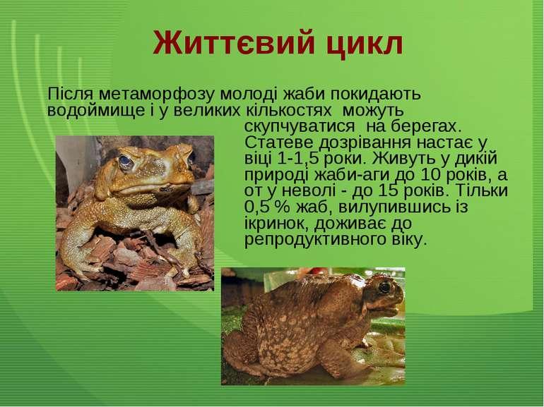 Після метаморфозу молоді жаби покидають водоймище і у великих кількостях можу...