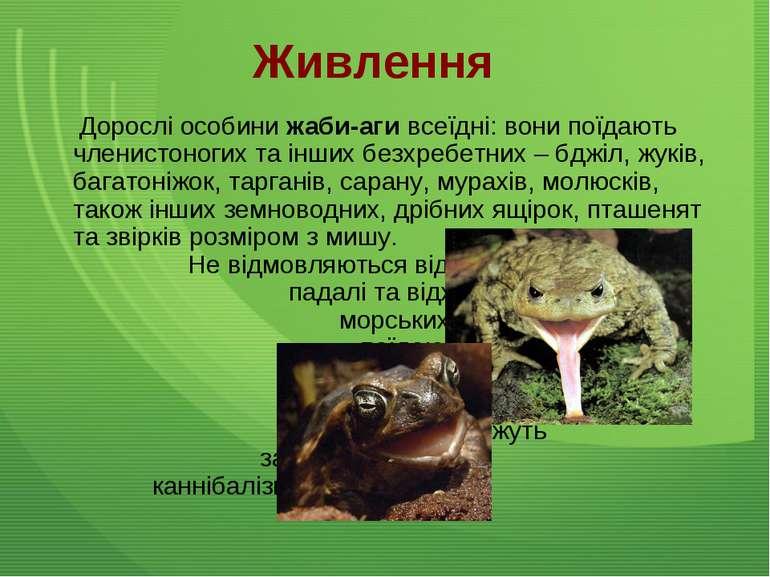 Живлення Дорослі особини жаби-аги всеїдні: вони поїдають членистоногих та інш...