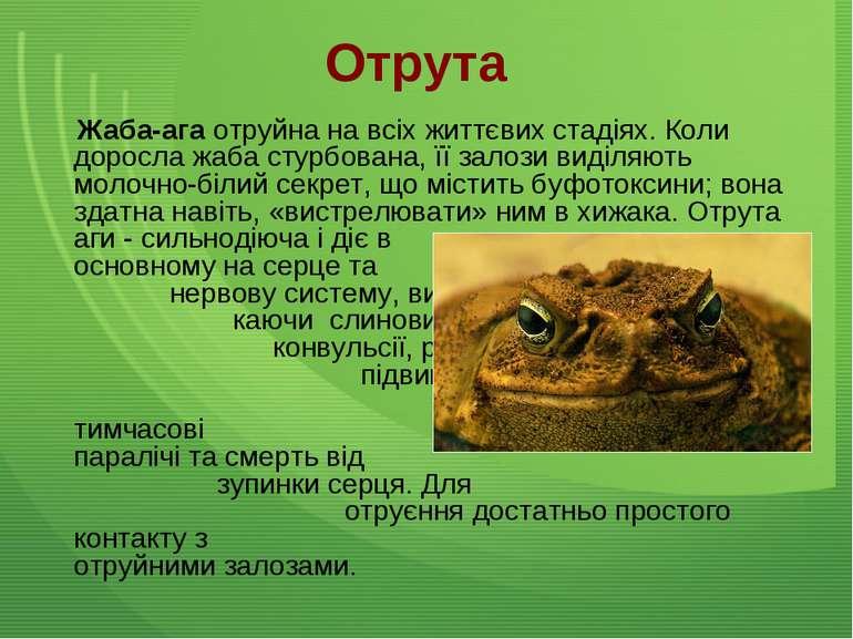 Отрута Жаба-ага отруйна на всіх життєвих стадіях. Коли доросла жаба стурбован...
