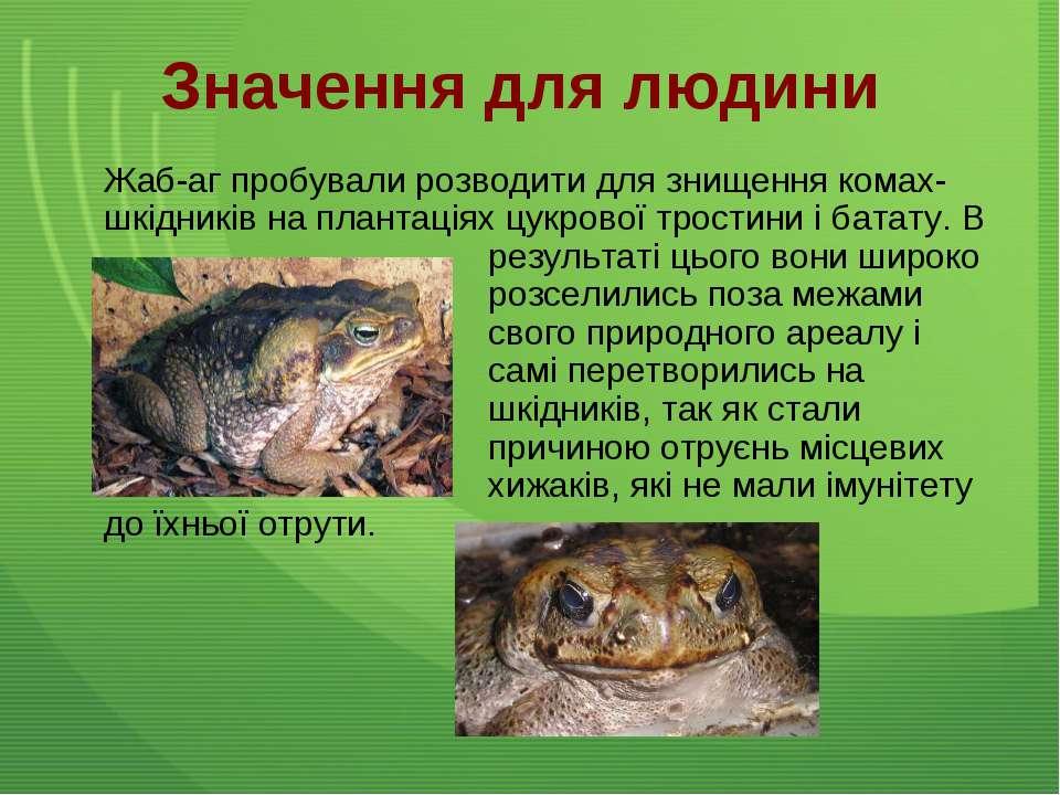 Значення для людини Жаб-аг пробували розводити для знищення комах-шкідників н...