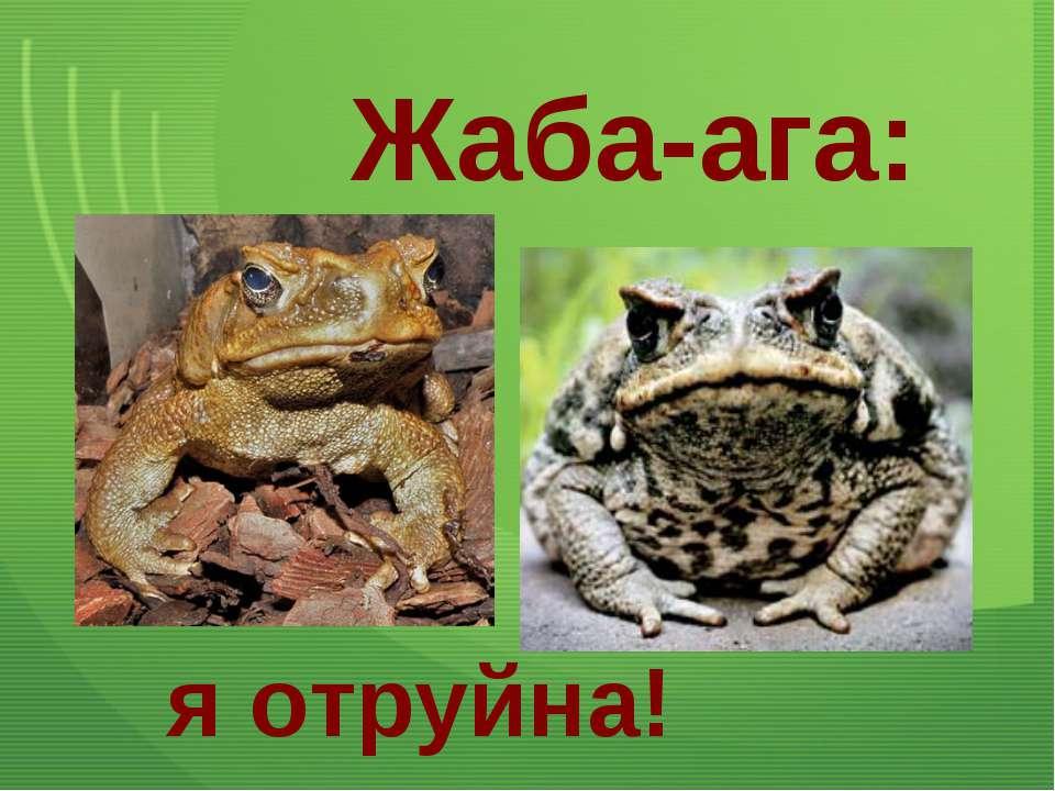 Жаба-ага: я отруйна!