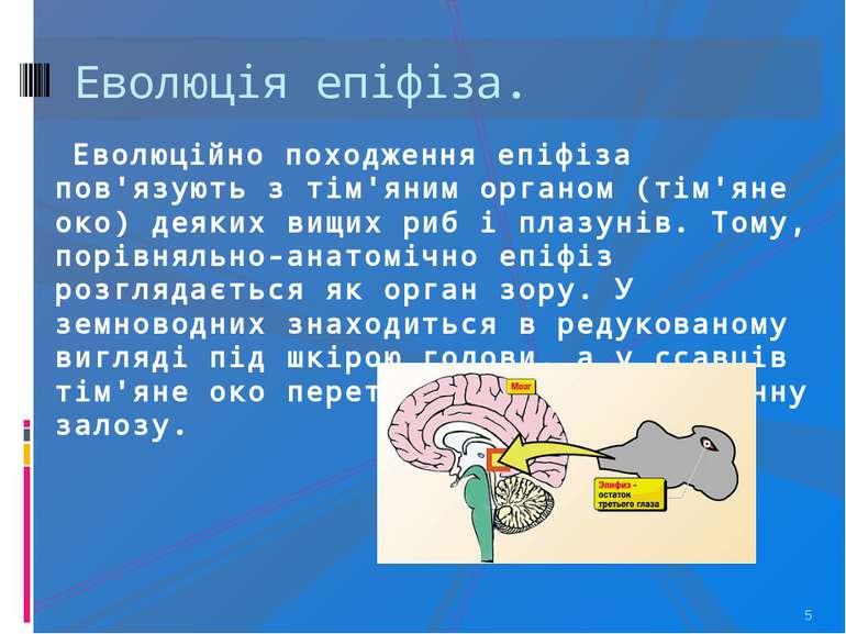 Еволюція епіфіза. * Еволюційно походження епіфіза пов'язують з тім'яним орган...