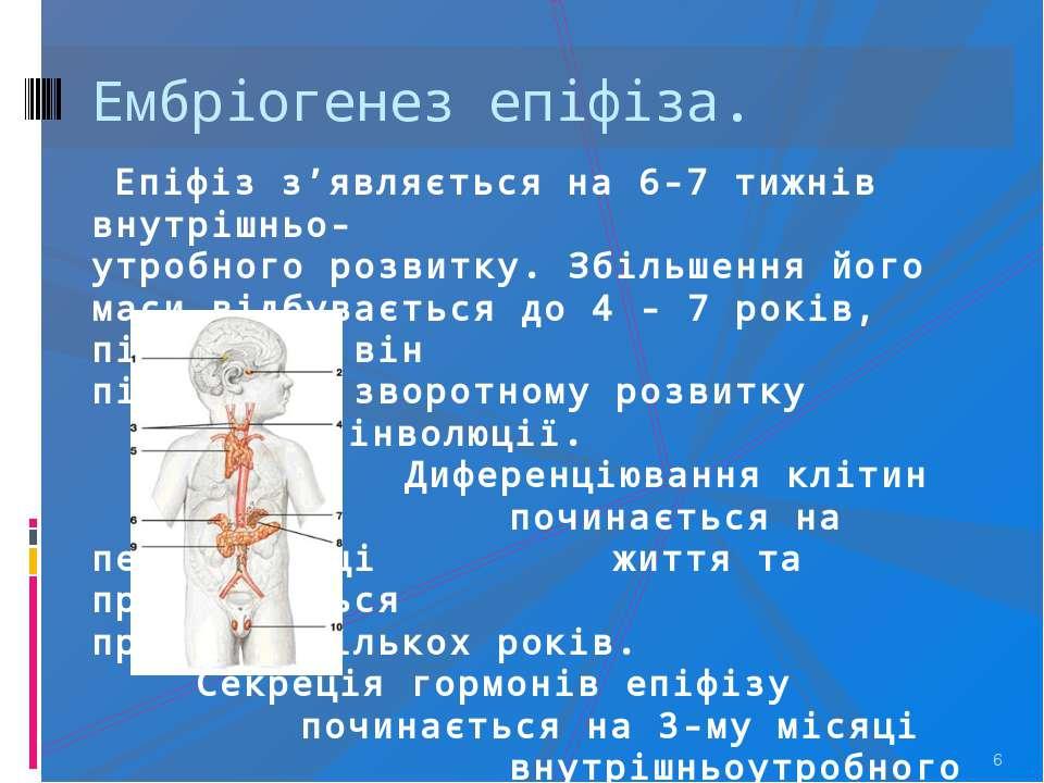 * Ембріогенез епіфіза. Епіфіз з'являється на 6-7 тижнів внутрішньо- утробного...