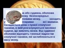 М'яка або судинна, оболонка головного мозку безпосередньо прилягає до речовин...