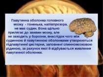 Павутинна оболонка головного мозку - тоненька, напівпрозора, не має судин. Во...