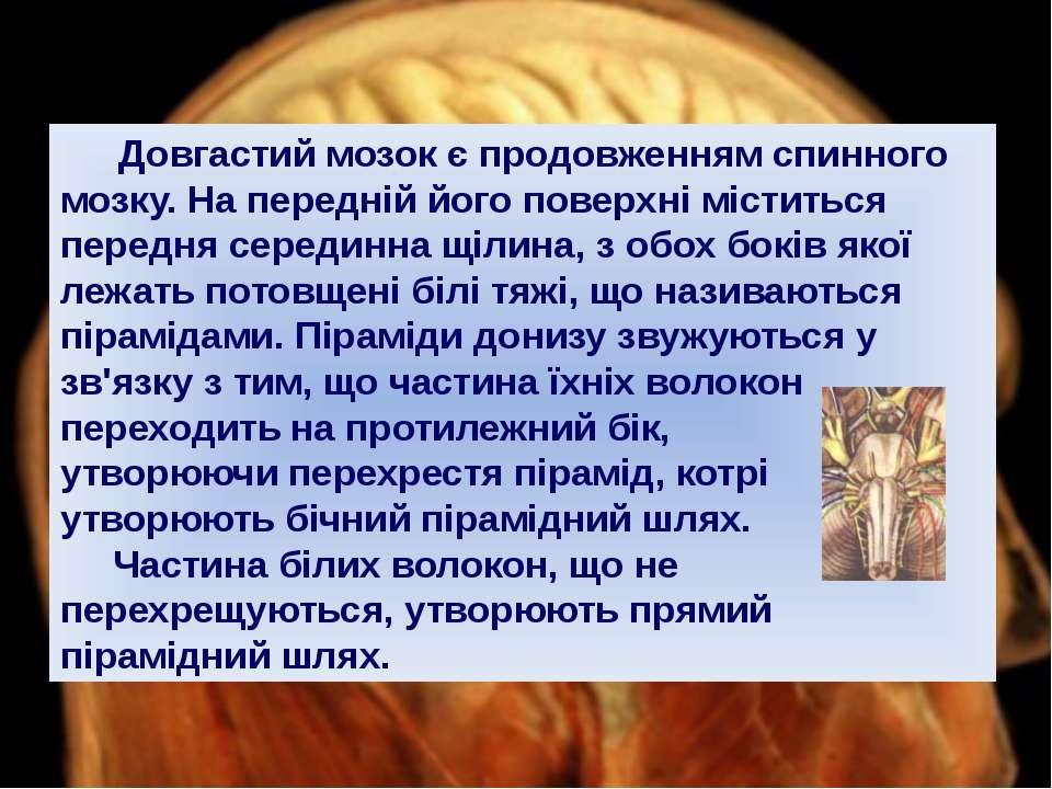 Довгастий мозок є продовженням спинного мозку. На передній його поверхні міст...