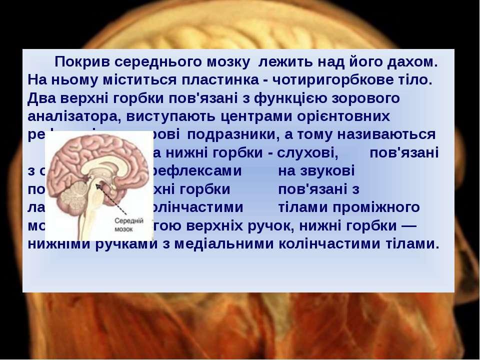 Покрив середнього мозку лежить над його дахом. На ньому міститься пластинка -...