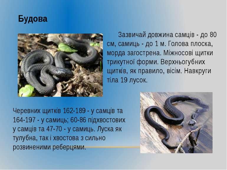 Будова Зазвичай довжина самців - до 80 см, самиць - до 1 м. Голова плоска, мо...