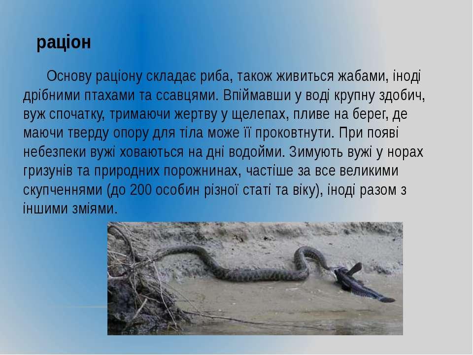 раціон Основу раціону складає риба, також живиться жабами, іноді дрібними пта...