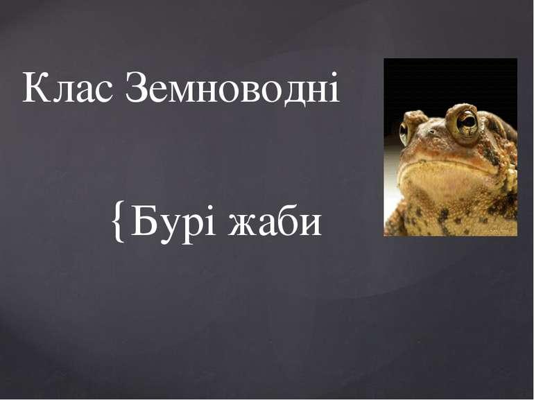 Бурі жаби Клас Земноводні {