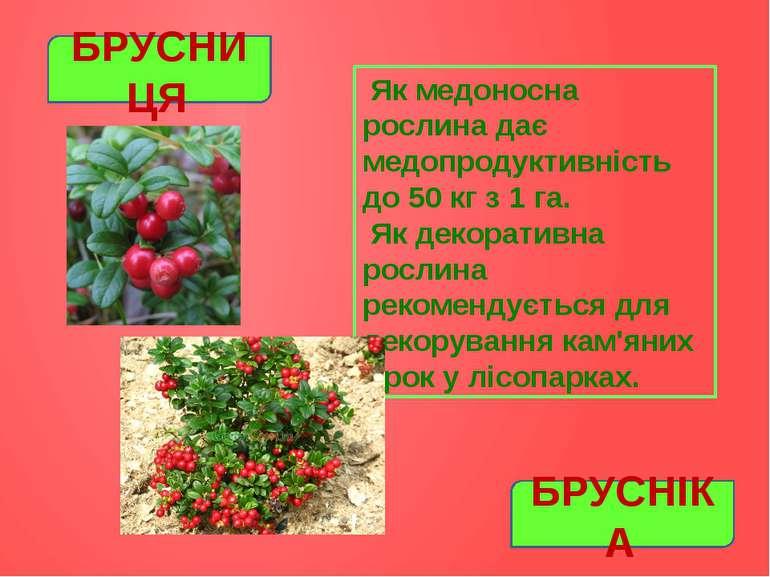 Як медоносна рослина дає медопродуктивність до 50 кг з 1 га. Як декоративна р...