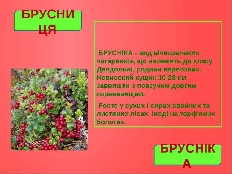 БРУСНІКА - вид вічнозелених чагарників, що належить до класу Дводольні, родин...