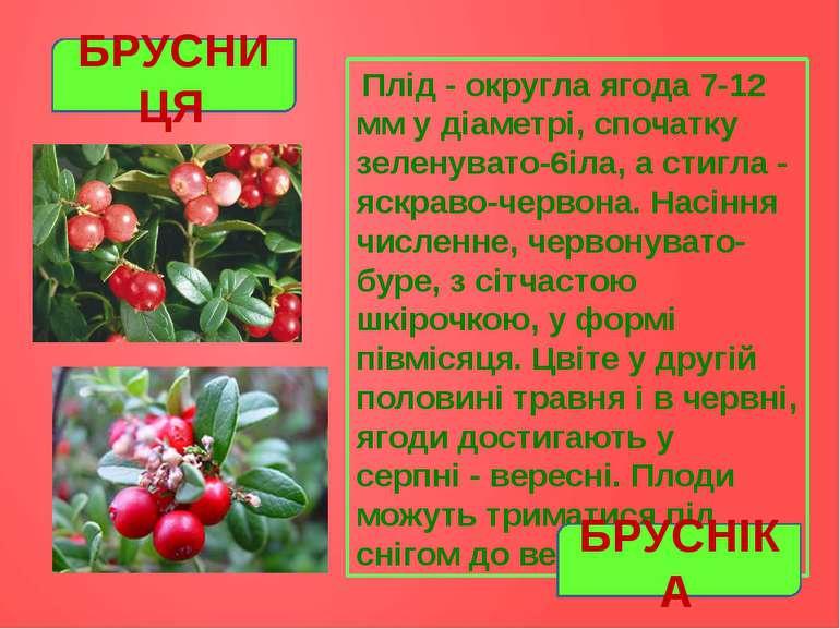 Плід- округла ягода 7-12 мм у діаметрі, спочатку зеленувато-6іла, а стигла-...