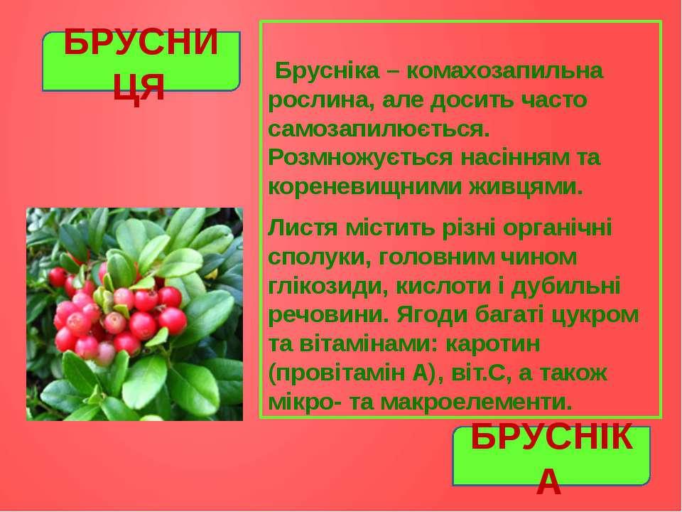 Брусніка – комахозапильна рослина, але досить часто самозапилюється. Розмножу...
