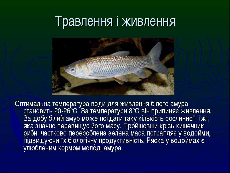 Травлення і живлення Оптимальна температура води для живлення білого амура ст...