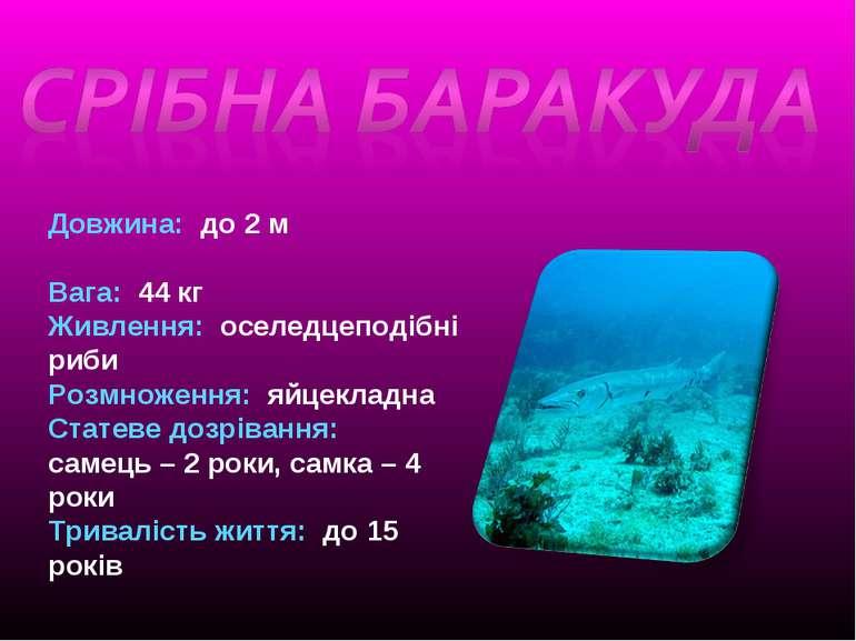 Довжина: до 2 м Вага: 44 кг Живлення: оселедцеподібні риби Розмноження: яйцек...
