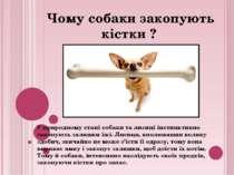 У природному стані собаки та лисиці інстинктивно закопують залишки їжі. Лисиц...