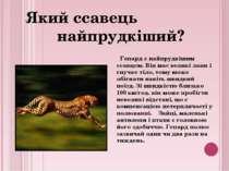 Гепард є найпрудкішим ссавцем. Він має великі лапи і гнучке тіло, тому може о...