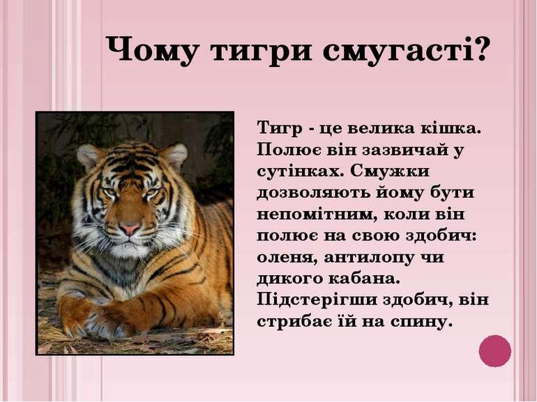 Тигр - це велика кішка. Полює він зазвичай у сутінках. Смужки дозволяють йому...