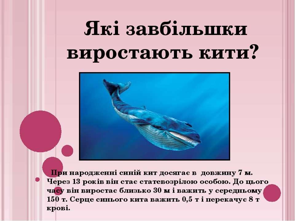 При народженні синій кит досягає в довжину 7 м. Через 13 років він стає стате...