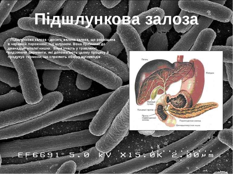 Підшлункова залоза Підшлункова залоза - досить велика залоза, що розміщена в ...