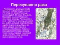 Рак повзає по дну водойми або виповзає на берег за допомогою п'яти пар ніг, п...