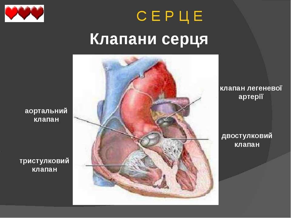 C Е Р Ц Е Клапани серця двостулковий клапан тристулковий клапан аортальний кл...