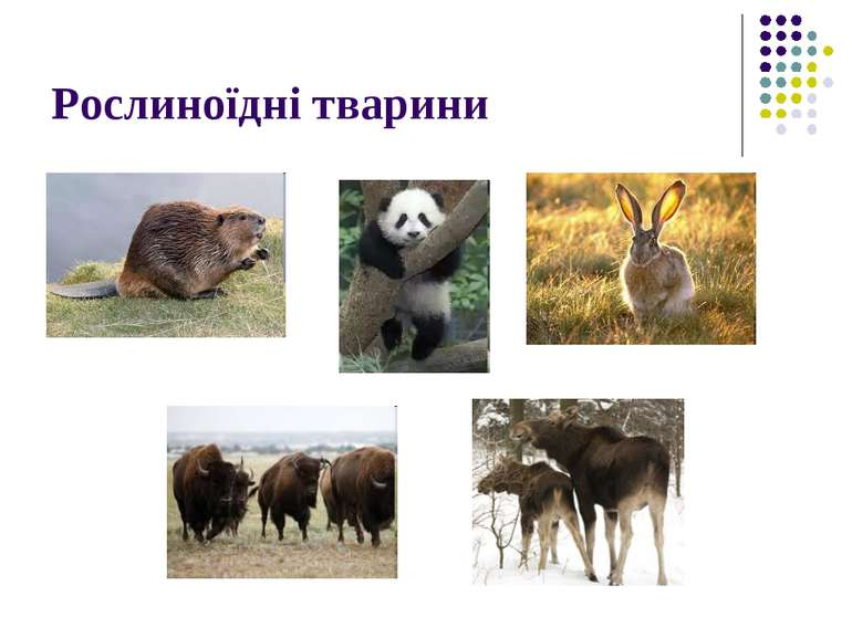 Рослиноїдні тварини